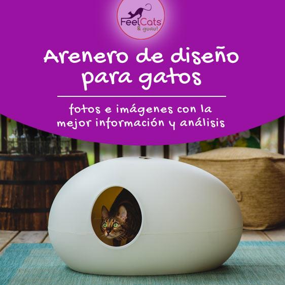 arenero de diseño para gatos