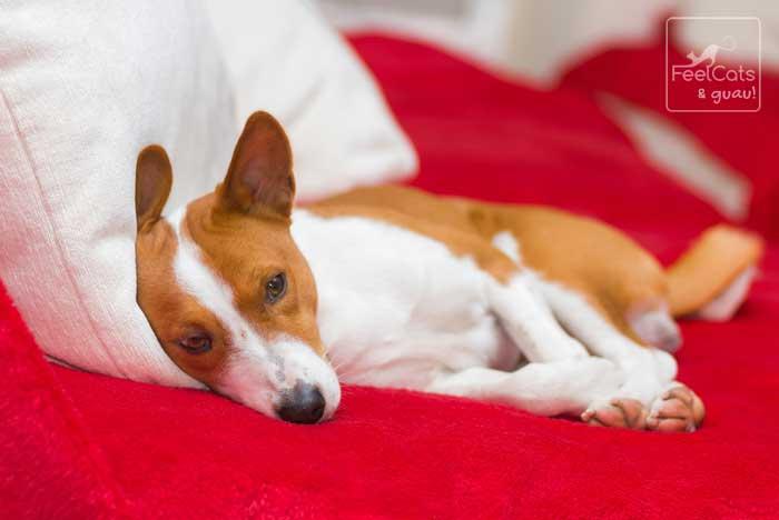 perro durmiendo y descansando en el sofa