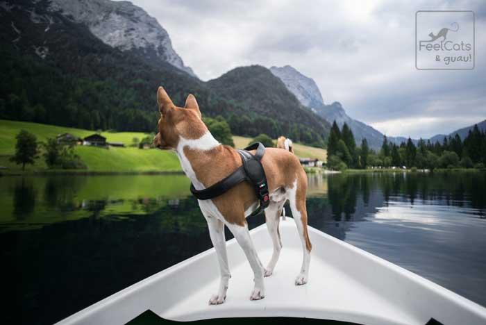 perro Basenji en las montañas, viaja en canoa
