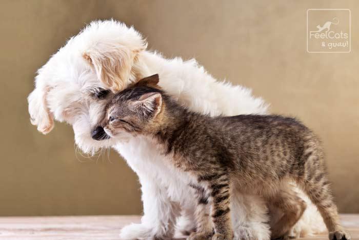 un perro y un gato juntos