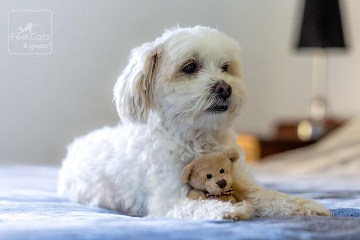 perro con su juguete