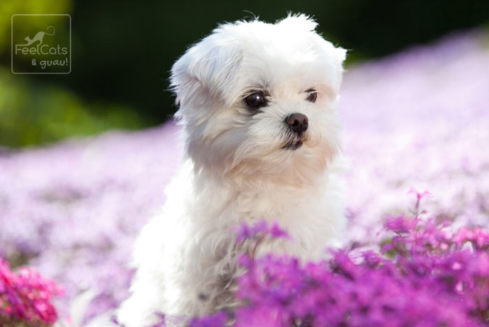 perrito blanco pequeño entre flores