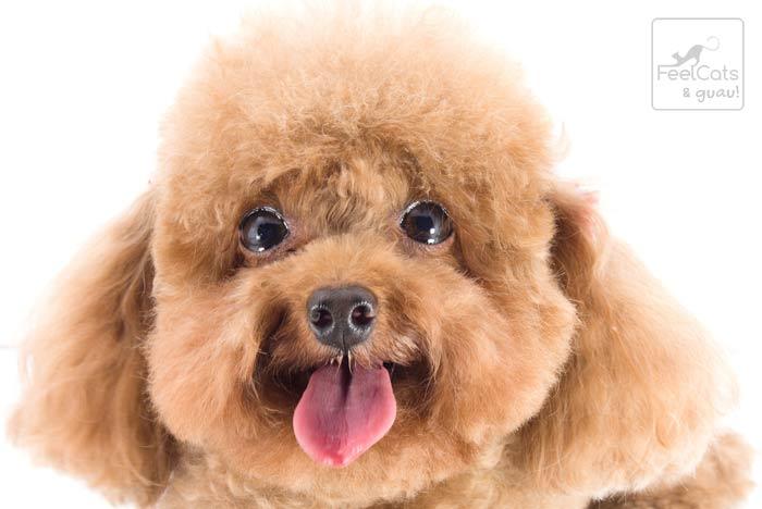 perro gracioso con la lengua fuera