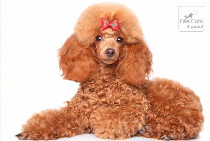 Perro bonito y guapo