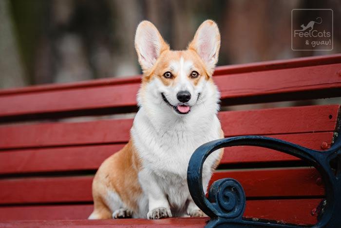 perro sentado en un banco