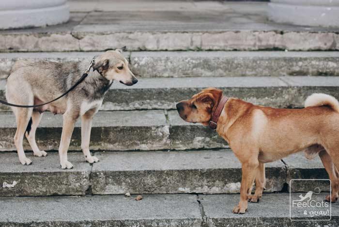 perra en celo, se le acerca otro perro