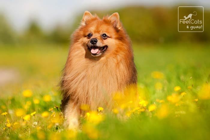 perro feliz en el campo