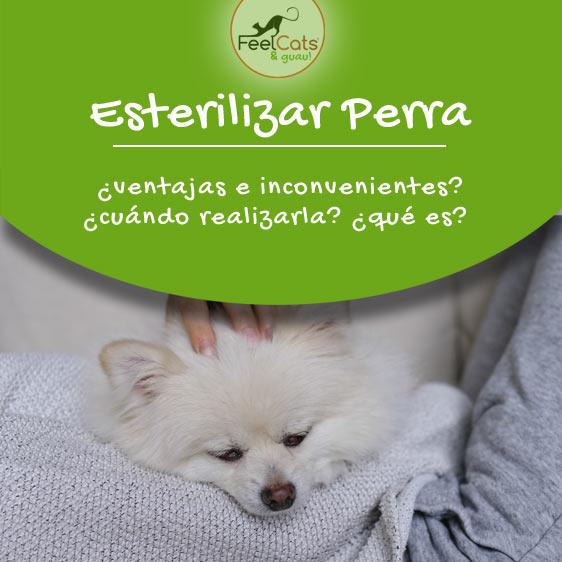 esterilizar perra y toda la información