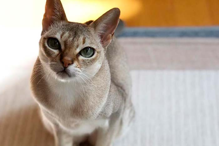 gato de patrón punteado