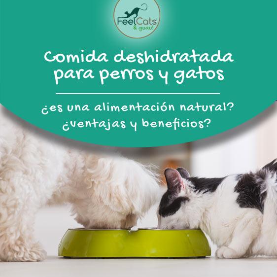 mejor comida deshidratada para perros y gatos