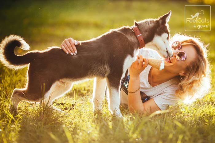 por qué los perros lamen