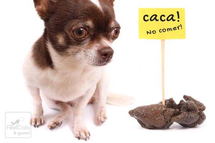 perro y una advertencia de comer caca