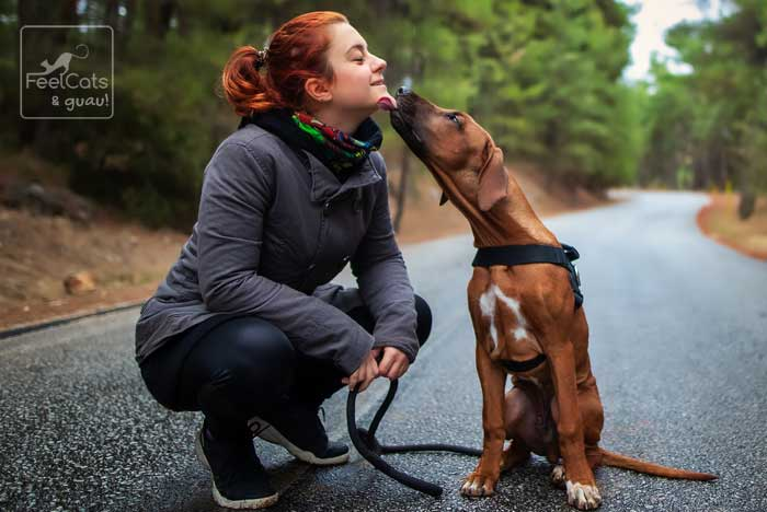 perro lamiendo a una mujer