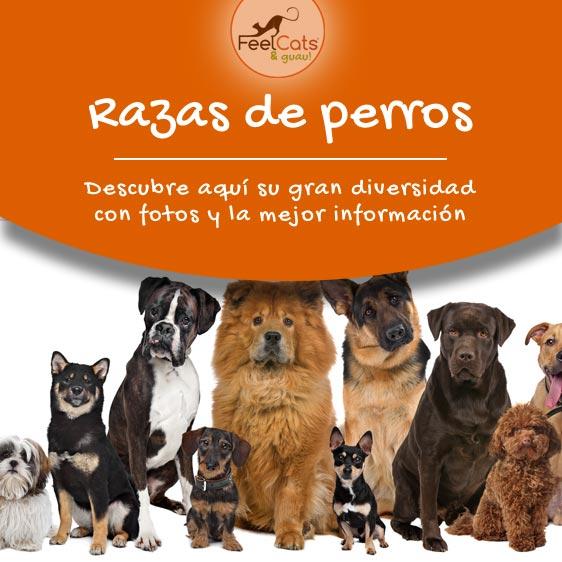razas de perros grandes, pequeños, medianos