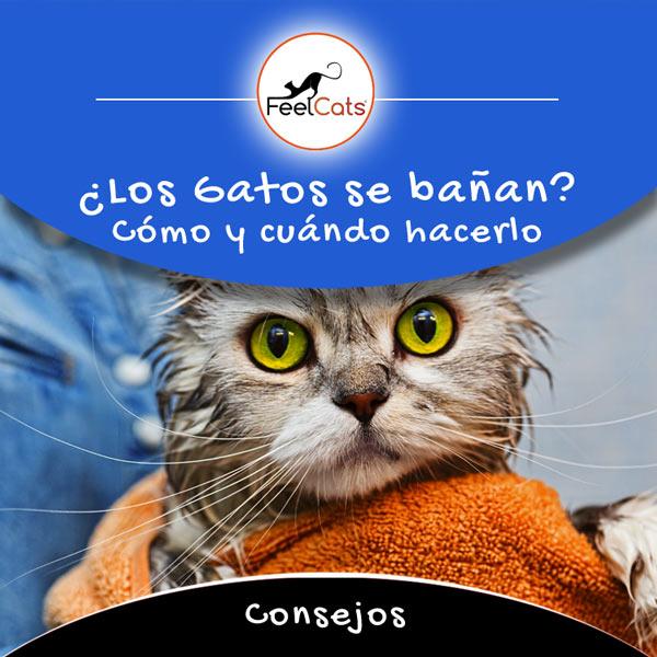 bañar a un gato y como hacerlo