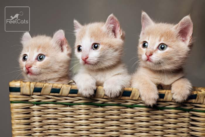 nombres de gatos en japones
