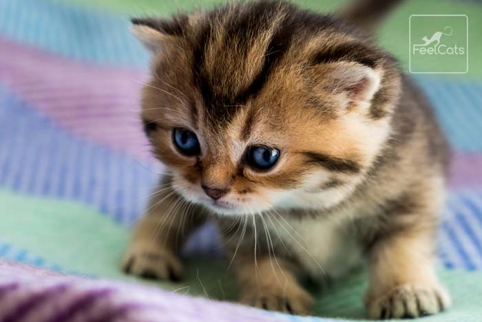 nombres japoneses para gatos y gatitos