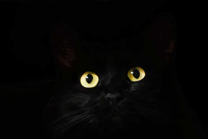 gato negro nombres