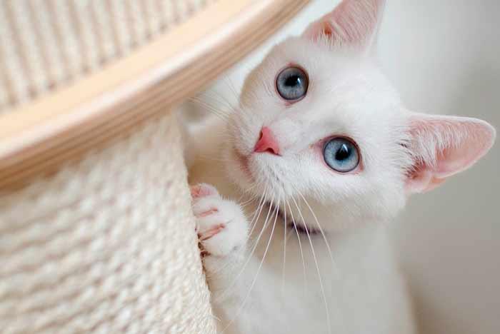 Nombres para Gatos Blancos, machos y hembras | Y Significado