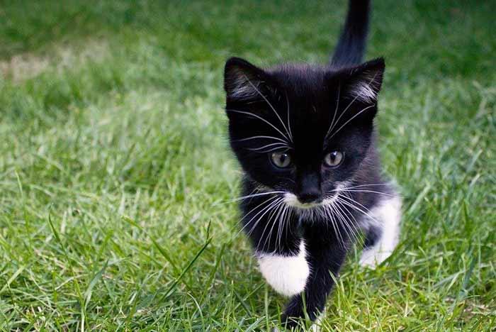 bebe gato blanco y negro