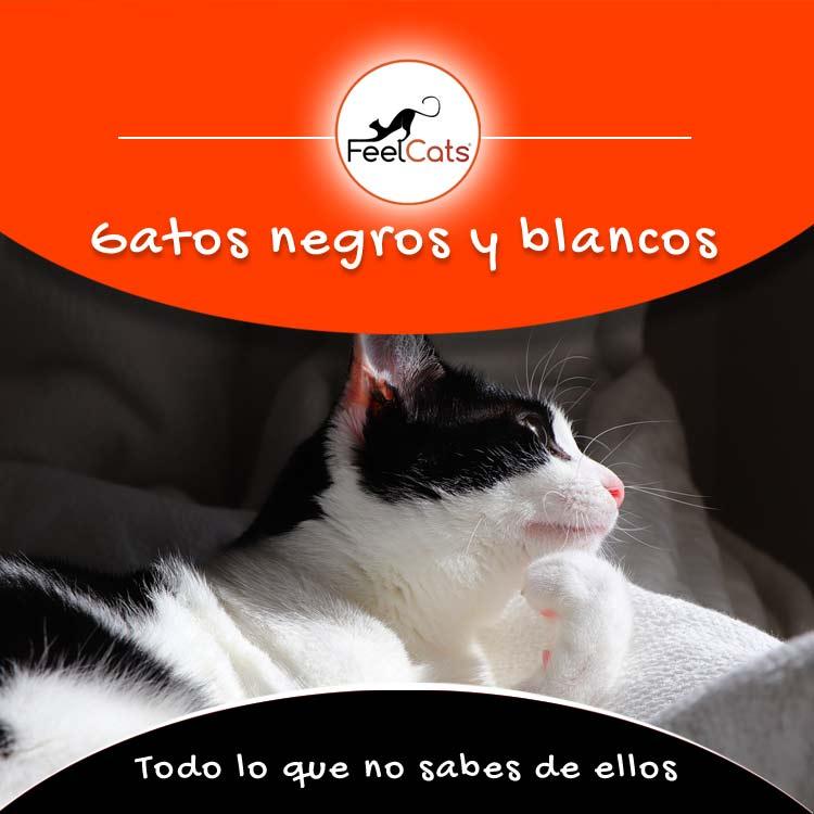 gatos blanco y negro