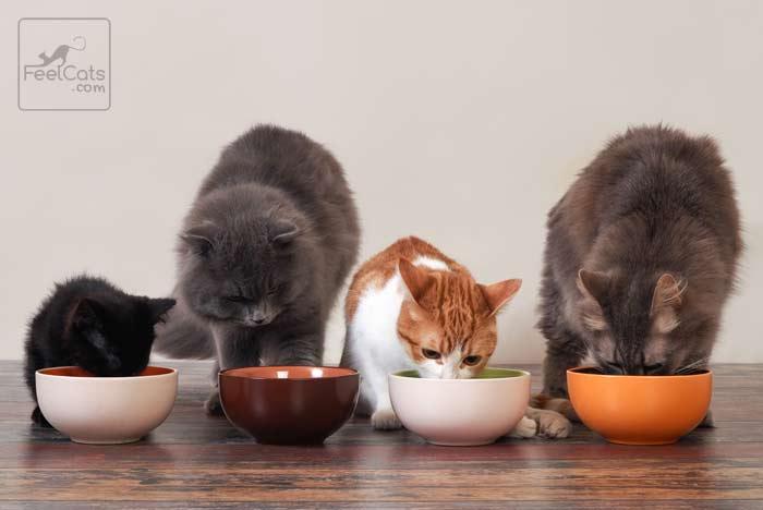 edad gatos crecen