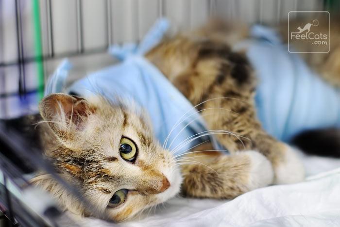 eutanasia gatos
