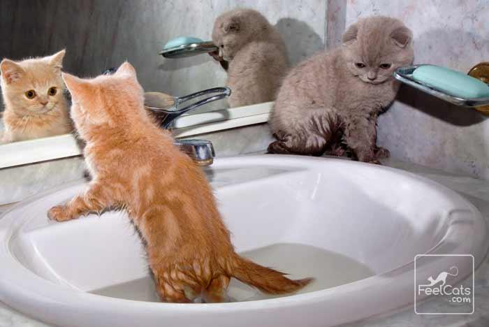 gatos en el agua, sin miedo
