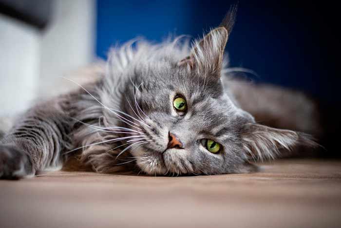como castigar a un gato agresivo