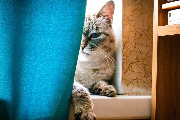 gato después de morder