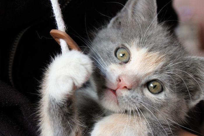 cuidados de un gatito bebé