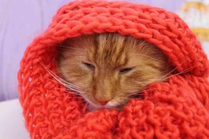 gato abrigado para que no coja frío