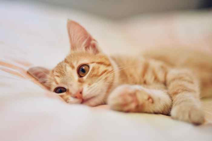 gato con resfriado