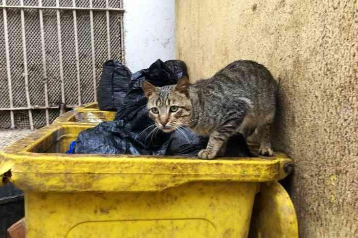 gato callejero con gripe felina