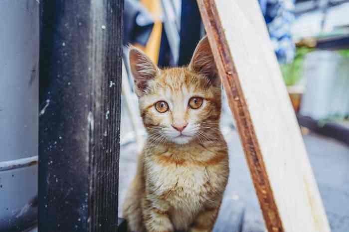 gato joven con resfriado