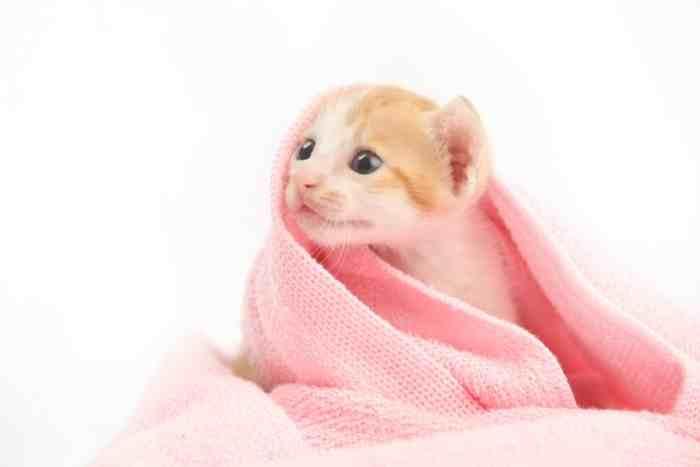 gatito se baña