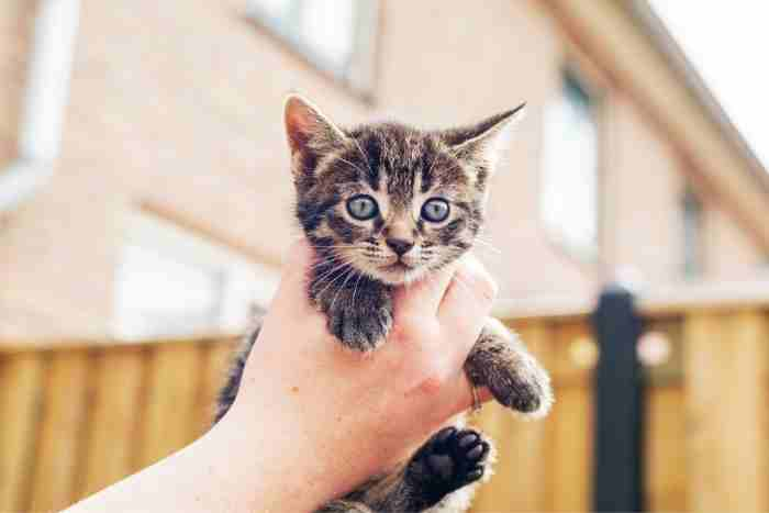 cuidar a un gatito de 1 mes