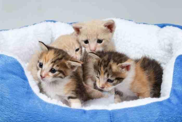 gatitos de un mes