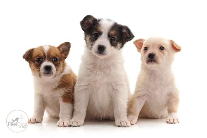 nombres japoneses para perritos