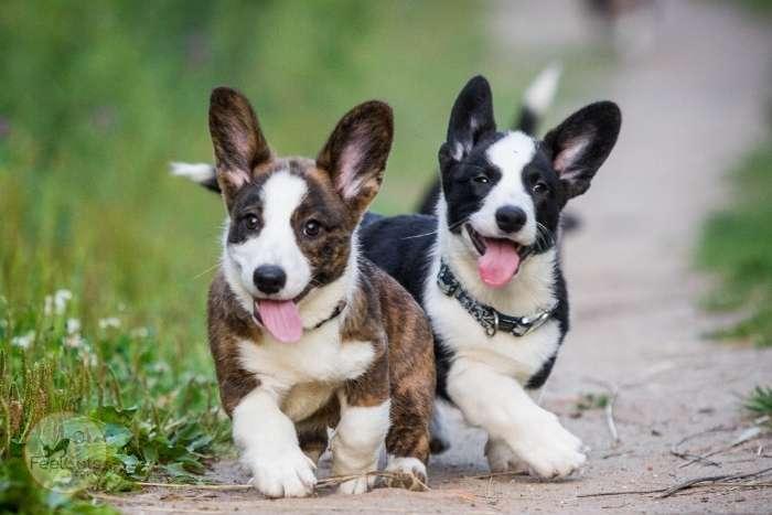 nombres para perros en japonés
